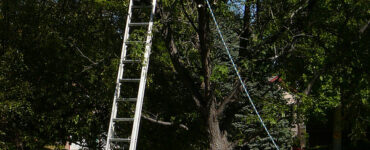 featured image - Tree Removal 101 Knowing When to Chop