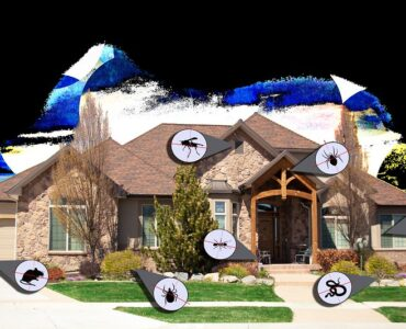 featured image - Why You Should Hire an Extermination Service Before Selling Your House