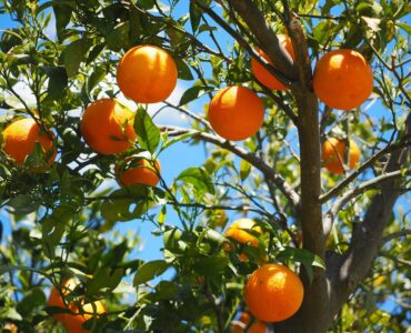featured image - 3 Fruit Trees for Your Garden That You Probably Didn't Think of