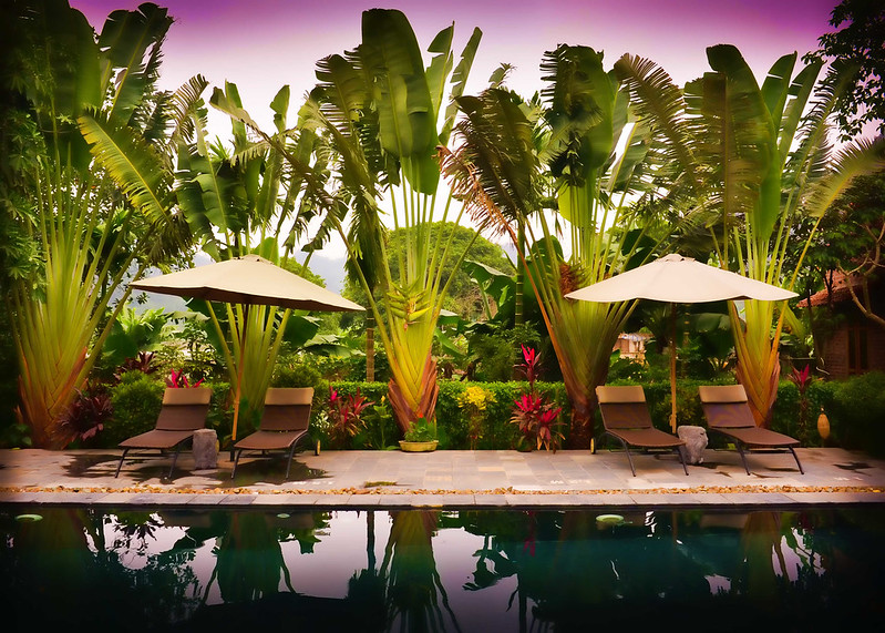 image - 8 Exceptional Reasons Why You Should Plant Trees Around Your Pools