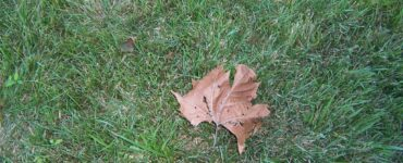 featured image - Dying Grass Here's How to Revitalize Your Lawn