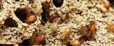 featured image - Heat Can Also Kill Termites