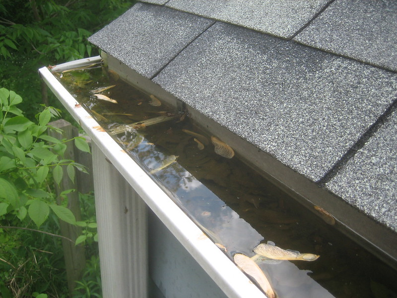 image - How Often Should the Gutters Be Cleaned