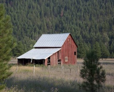featured image - What Is the Best Place to Build A Shed?