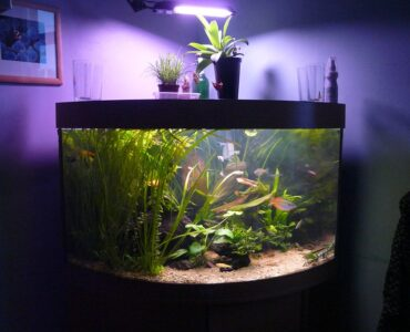 featured image - Is Aquarium Good to Keep at Home?