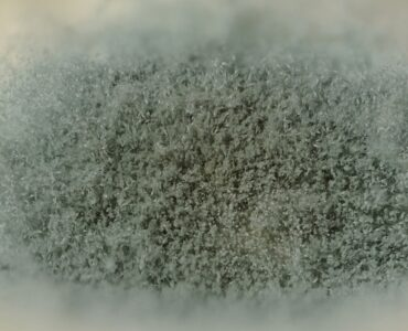 featured image - Do I Really Need Mold Remediation