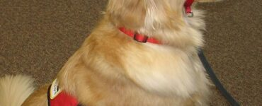 featured image - How to Groom your Dog at Home