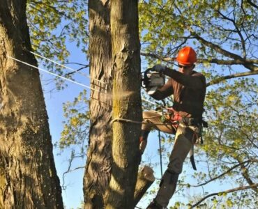 featured image - The Importance of Using Tree Experts
