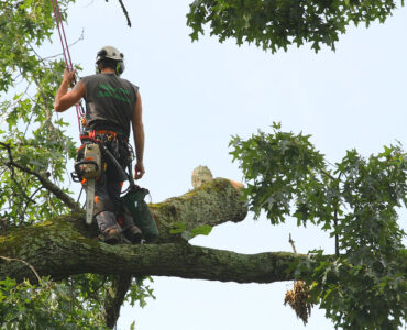 featured image - Top 5 Tips on How to Choose a Tree Service