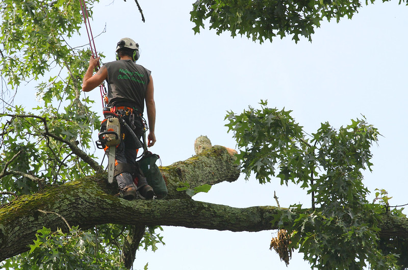 image - Top 5 Tips on How to Choose a Tree Service