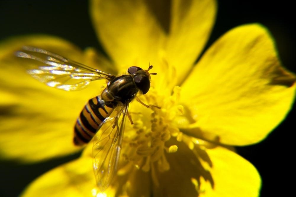 Wasps – The Good, The Bad and The Ugly