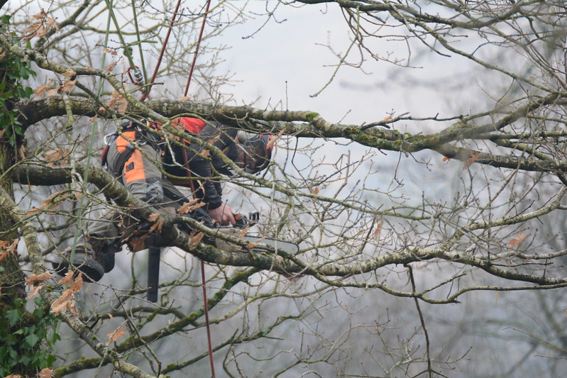 image - 3 Reasons Why You Should Hire a Professional Tree Surgeon to Remove a Tree