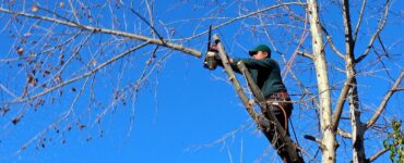 featured image - 4 Things to Look for in a Tree Service Company
