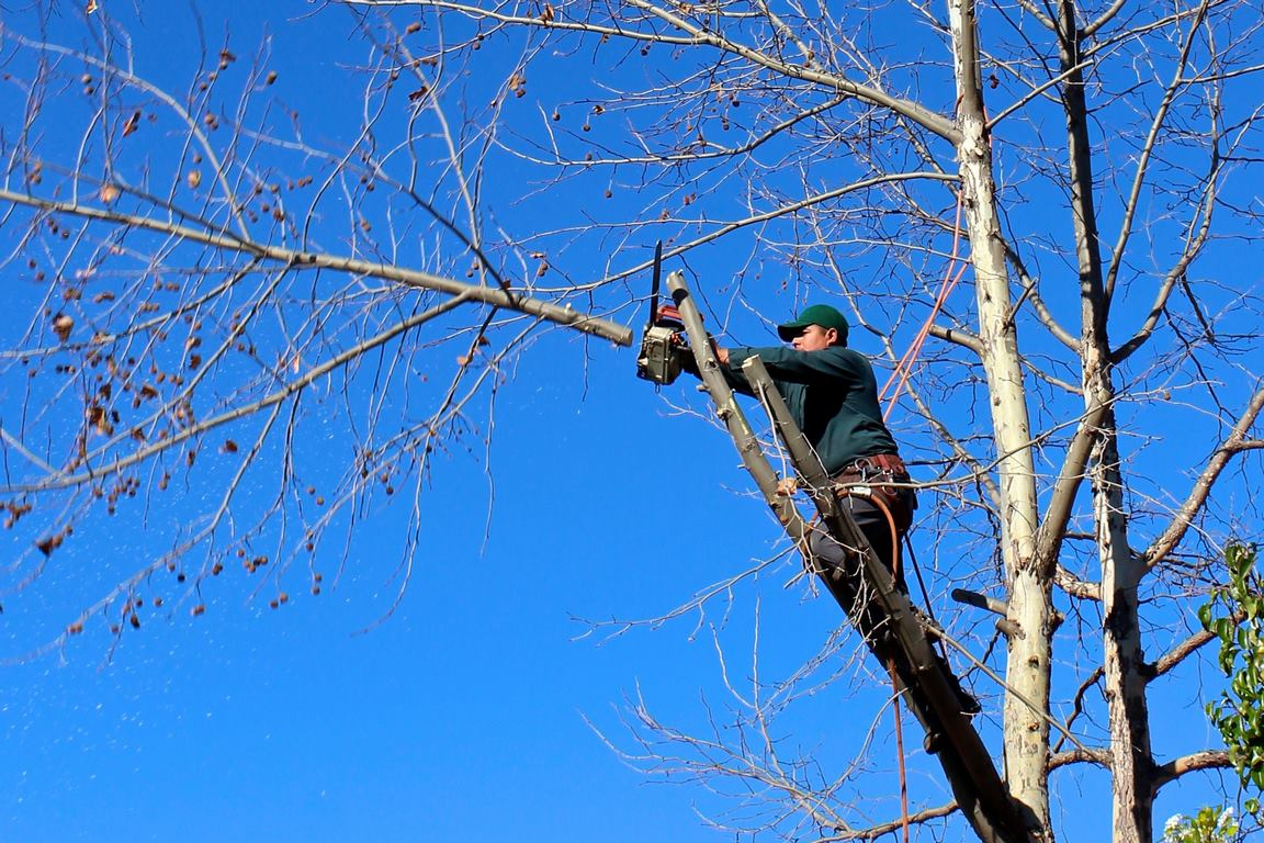 image - 4 Things to Look for in a Tree Service Company