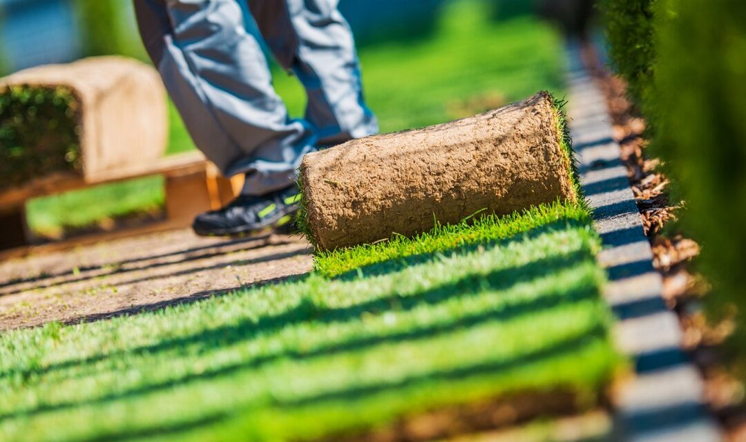 5 Curb Appeal Landscaping Ideas on a Budget to Consider