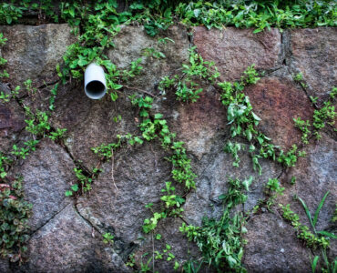 featured image - 5 Natural Ways to Kill Weeds Without Using Harmful Chemicals