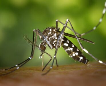 featured image - 5 Natural (and Simple) Ways to Get Rid of Mosquitoes