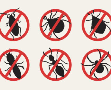 featured image - 6 Easy Ways to Get Rid of Common Household Bugs