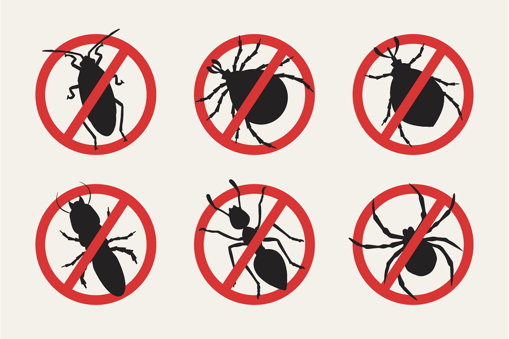image - 6 Easy Ways to Get Rid of Common Household Bugs