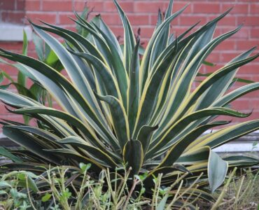 featured image - Easy, Low Maintenance Plants to Take Care of and Our Top Pick for Newbies