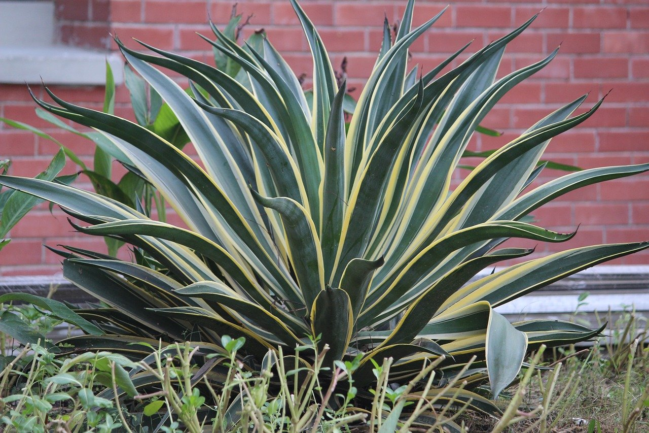 Easy, Low Maintenance Plants to Take Care of and Our Top Pick for Newbies