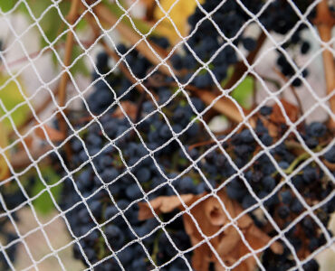 featured image - Everything You Need to Know About Anti-Bird Netting