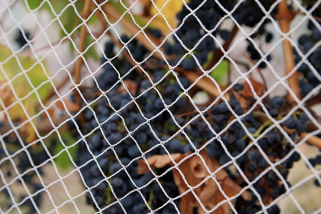 image - Everything You Need to Know About Anti-Bird Netting