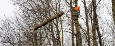 featured image - How do Professionals Remove a Tree?