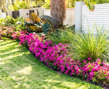 featured image - How to Choose the Right Landscaping Plants?