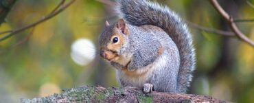 featured image - How to Squirrel-Proof Your Home this Summer