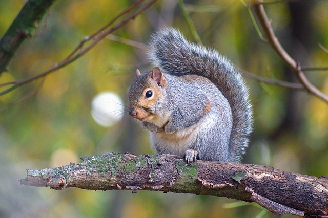 image - How to Squirrel-Proof Your Home this Summer