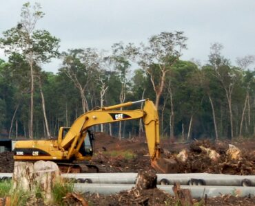 featured image - Land Clearing