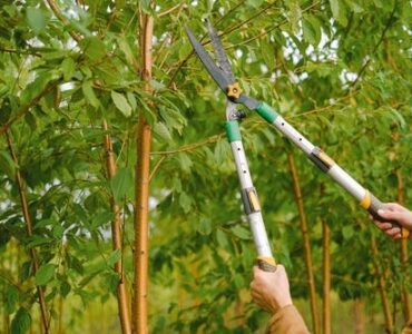 featured image - 5 Trimming Tips to Keep Your Trees in Great Shape