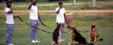 fetaured image - What are the Benefits of Training My Dog?