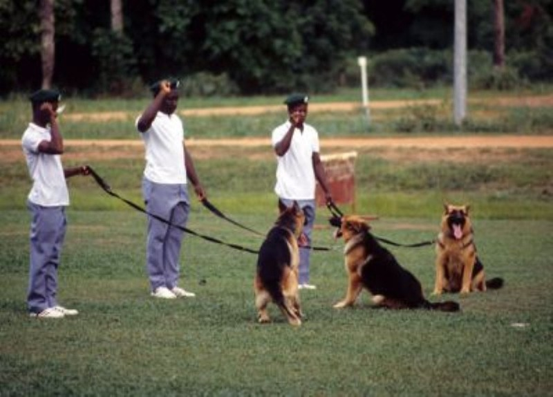 What are the Benefits of Training My Dog?