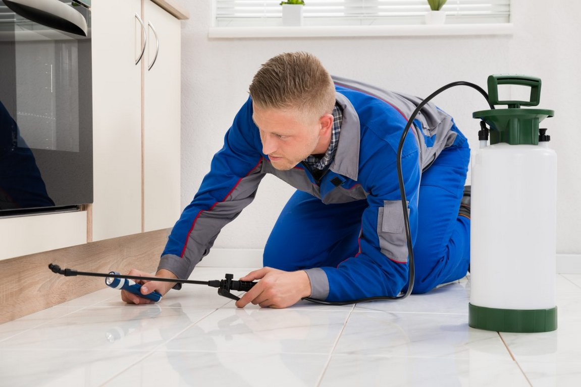 What to Look for When Hiring a Pest Control Company