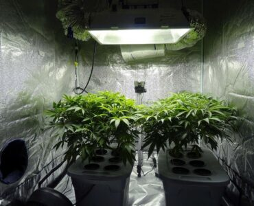 featured image - Grow Tents Setup Guide for Beginners