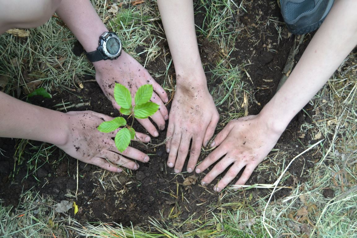 The Importance and Benefits of Planting Trees