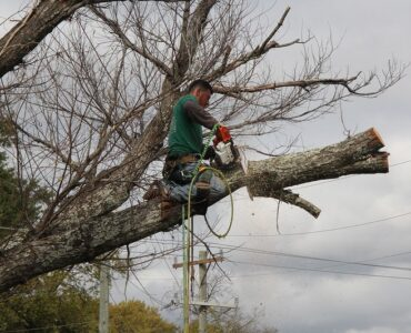featured image - Reasons You Should Use a Tree Removal Company