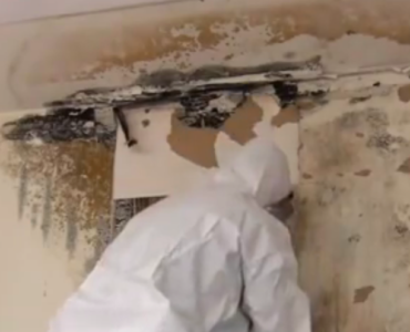 featured image - 5 Reasons to Hire Professional Mold Remediation Services for Your Hom