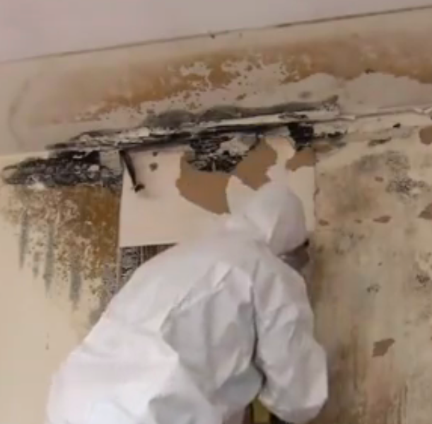 5 Reasons to Hire Professional Mold Remediation Services for Your Home