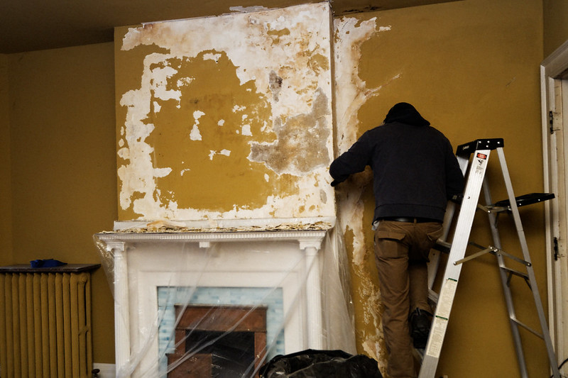7 Reasons to Opt For Professional Mold Removal