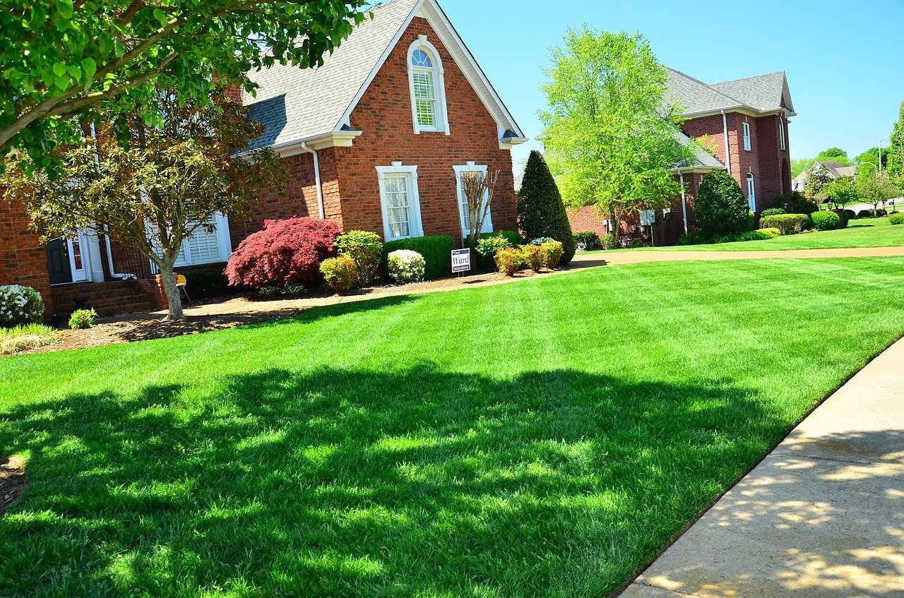 How to Take Care of Your Lawn: 8 Maintenance Tips