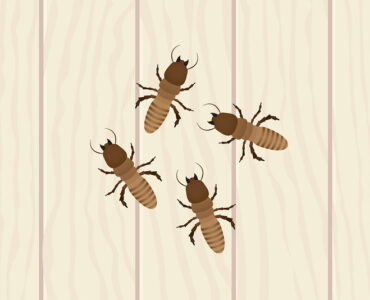 featured image - Things to Remember After Availing Pest Control Service at Your Home