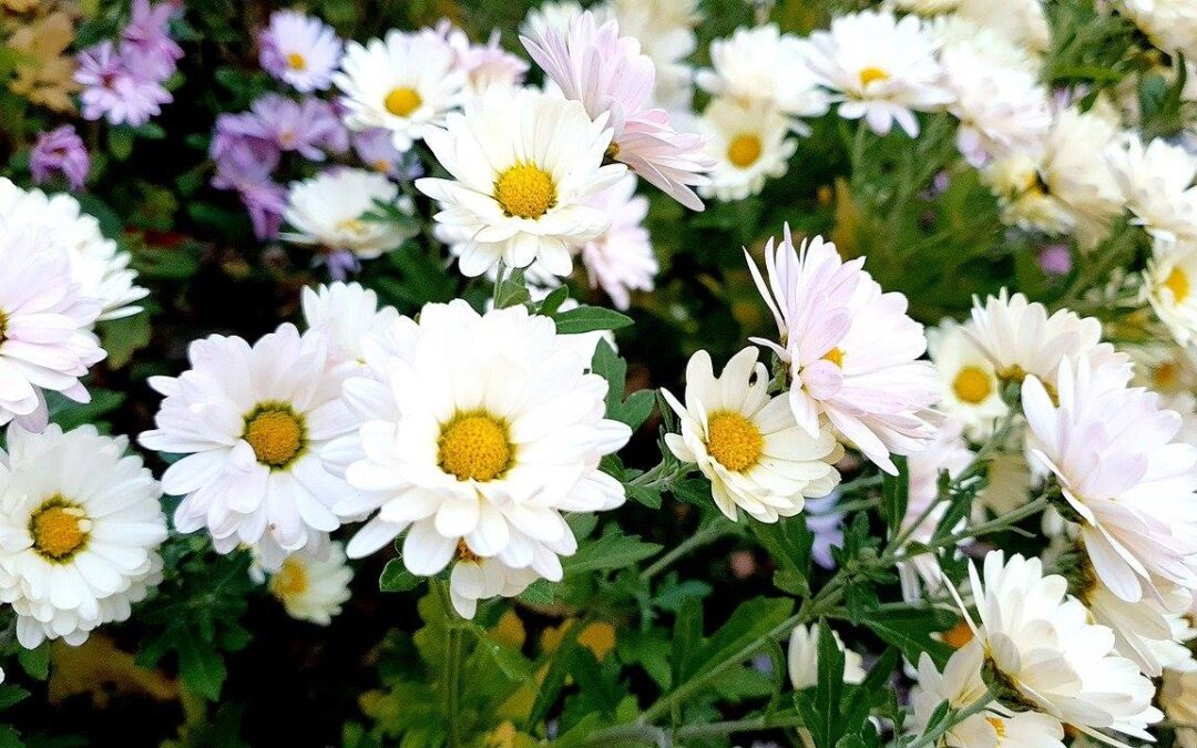 7 Great Fall Flowers for a More Colourful and Gorgeous Garden
