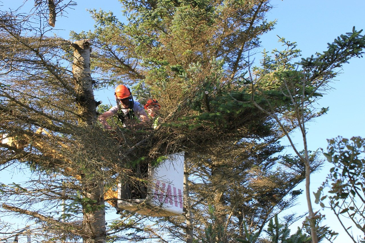 3 Reasons Why You Should Hire Fully Certified Tree Surgeons