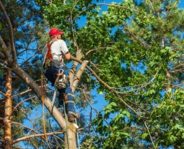 featured image - Do I Need Tree Service in RI for Healthy Trees? | a Property Owner's Guide