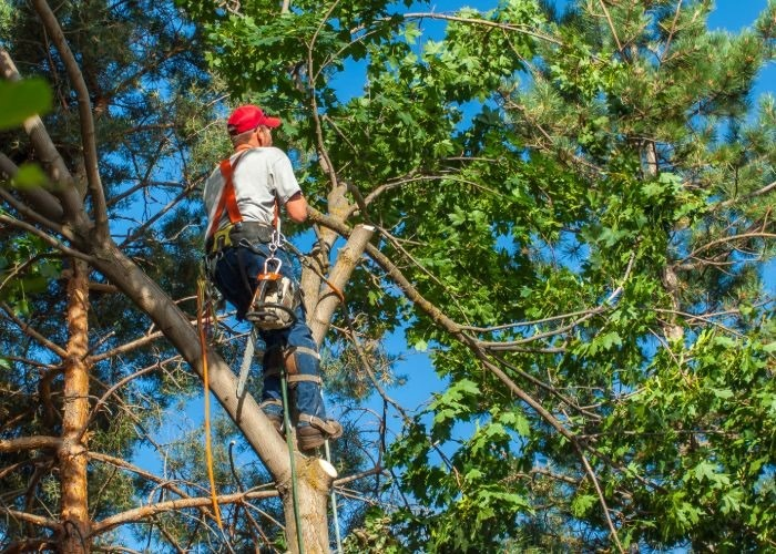 Do I Need Tree Service in RI for Healthy Trees? | a Property Owner's Guide