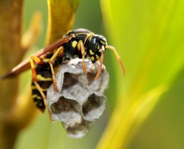 featured image - Is it a Wasp Nest or a Beehive?