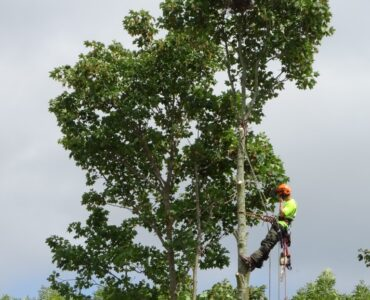 featured image - What Can Local Tree Surgeons Do for You